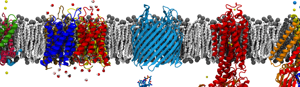 SimBac – simulations of bacterial systems