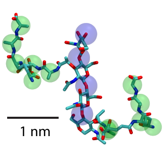 Two units of peptidoglycan with sugars highlighted by blue spheres and peptide cross-linkers by green.